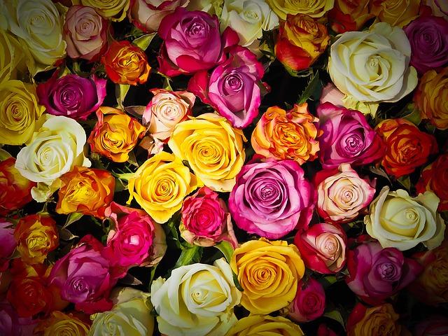 Anniversario Di Matrimonio Quante Rose.Quante E Quali Rose Regalare Vetrinaregali It